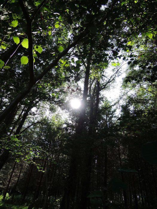 forest02 mundus volubilis