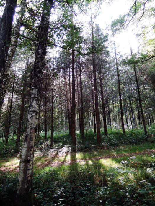 forest01 mundus volubilis