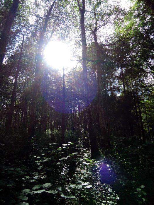 forest04 mundus volubilis