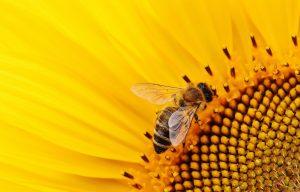 whirling bee mundus volubilis