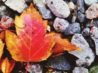 autumn leaf mundus volubilis