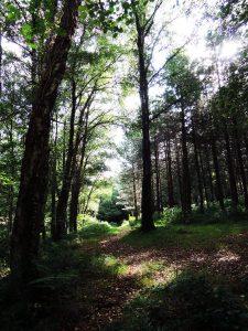forest03 mundus volubilis