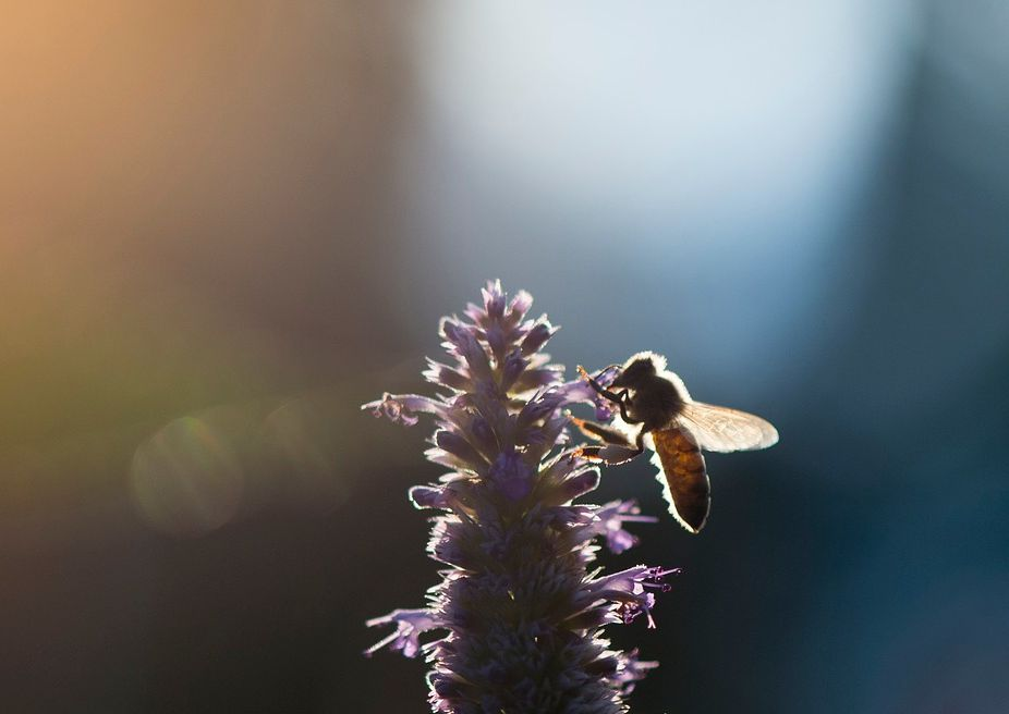 the whirling bee mundus volubilis